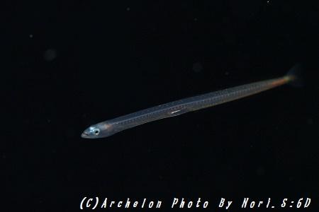 160721-n-07fish