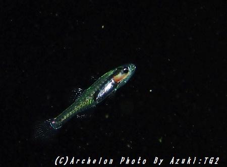 160923-a-04fish