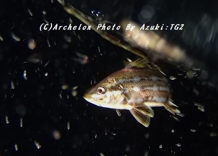 170714-a-05hiekoto