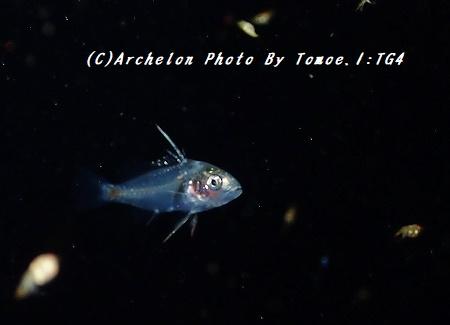 170824-i-03fish