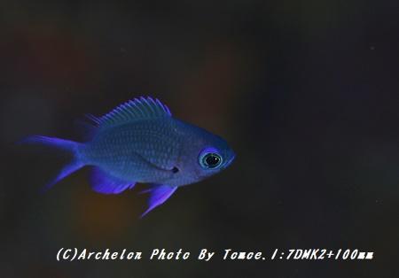 171128-i-03shirobo
