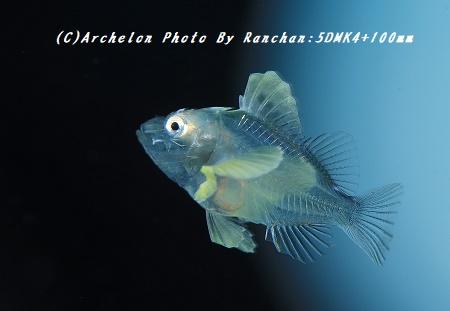 180430-a-02husakasa
