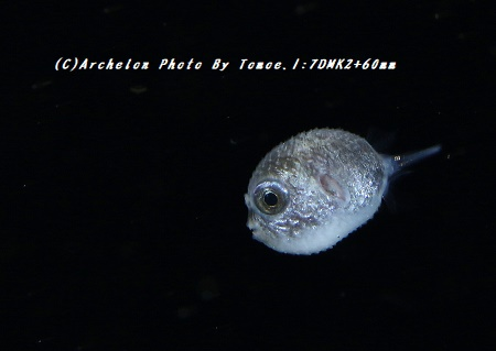 180517-i-04hugu