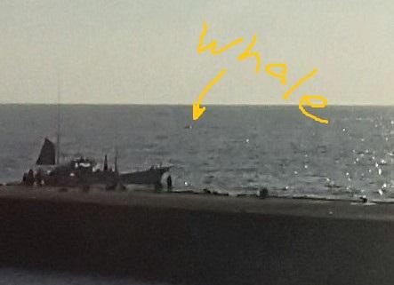 181221-ya-kujira02