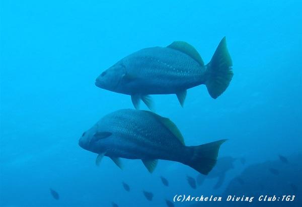 fish191230-04