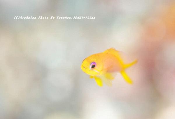 200829-ra-01kingyo