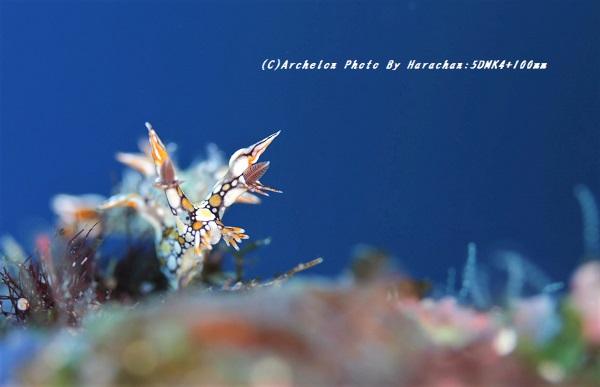 201228-hara-05hiodoshi