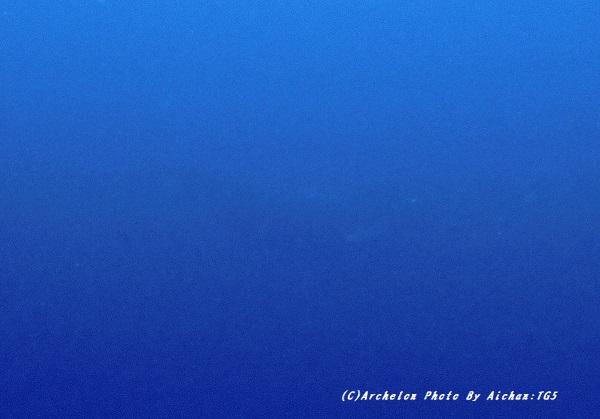 kujira201229-na-s