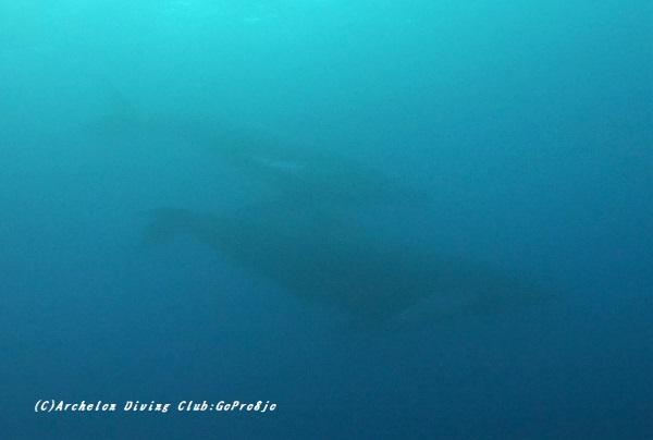kujira210304-pho-02-x